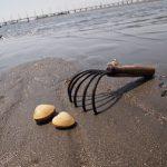 5月の国内旅行は海を先取り!彼氏と楽しめるおすすめの潮干狩りスポット5選